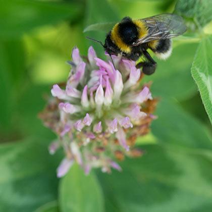 Naturschutz –Insekten im Weinberg